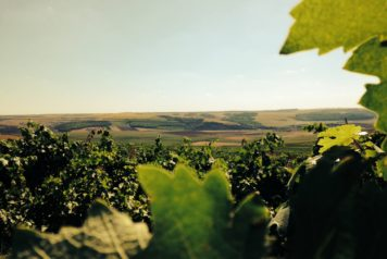domeniile-adamclisi-winery-in-summer